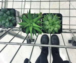 plants, grunge, and green image