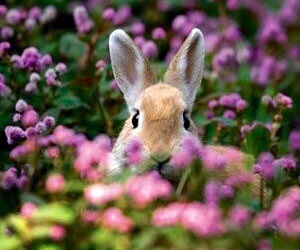 bunny, easter, and flowers image