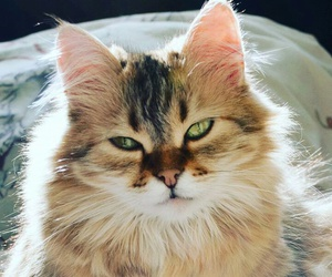 cat, tumblr, and simple image