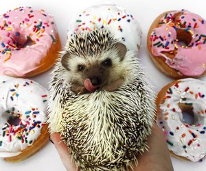 donuts, animal, and sweet image