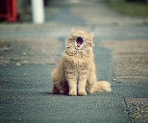 cat, animal, and yawn image