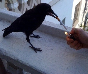 cigarette, bird, and smoke image