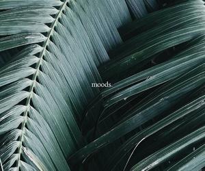 mood, green, and plants image