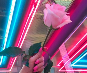 aesthetics, color, and flower image