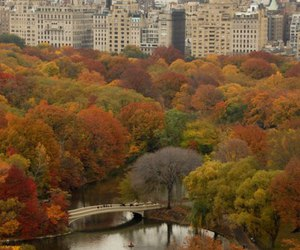 new york, Central Park, and autumn image