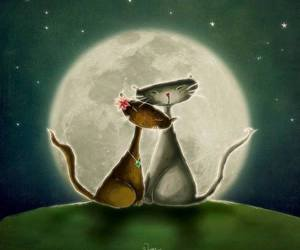 cat, romantic, and stars image