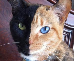 black, cats, and brown image