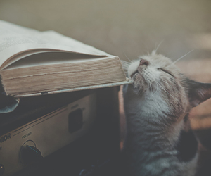 beautiful, books, and cat image