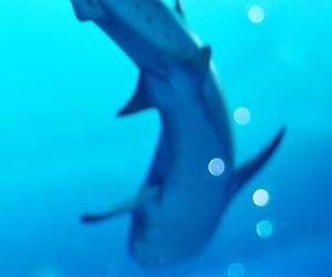 aquarium, fish, and ocean image