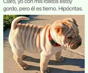 funny, dog, and frases image