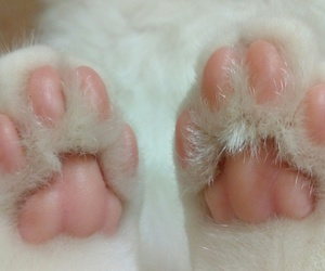 animals, paws, and beautiful image