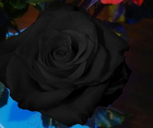 rose and blackrose image