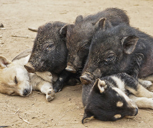 dog, pig, and puppy image