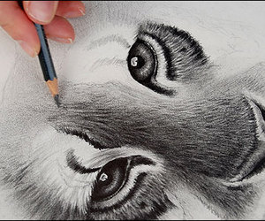 tiger, draw, and animal image