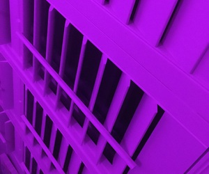blinds, neon, and purple image