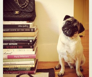 book, pug, and chanel image