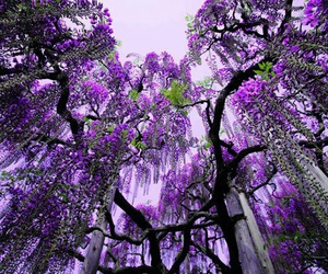 tree, purple, and flowers image