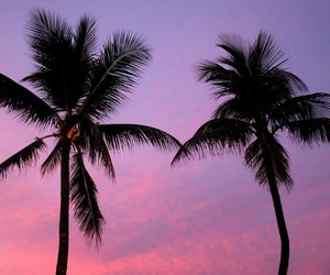 ocean, palm trees, and pink image