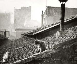 cat, roof, and paris image