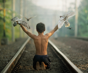 bird, boy, and fly image