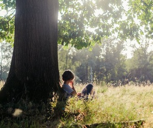 summer and tree image