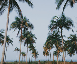 wanderlust, nature, and palms image