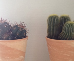 aesthetics, cactus, and plant image