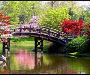 bridge, flowers, and spring image