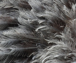 feather, grey, and gray image