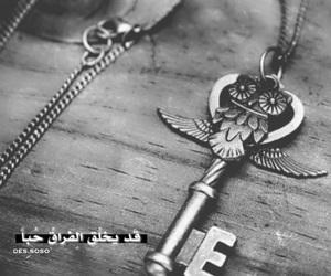 owl, بومة, and حُبْ image
