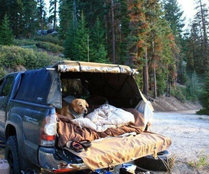 dog, travel, and forest image
