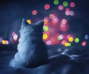 cat, light, and kitten image