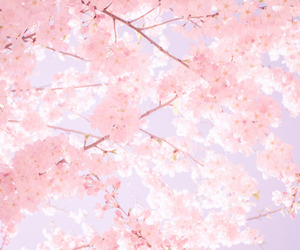 pink, flowers, and sakura image