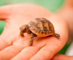 cute animals, tortoise, and baby animals image