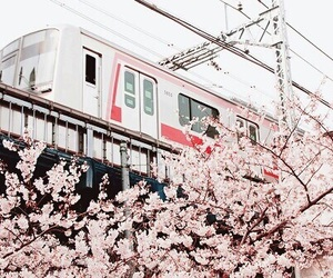japan, pink, and asia image