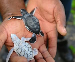 art, baby animals, and amazing image