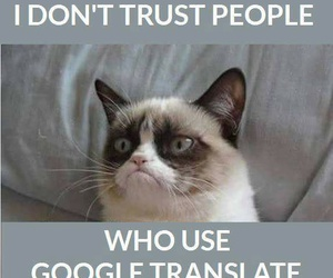 languages, grumpy cat, and google translator image