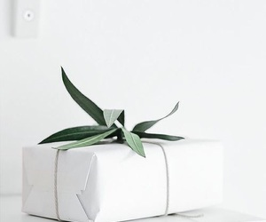 white, plant, and green image