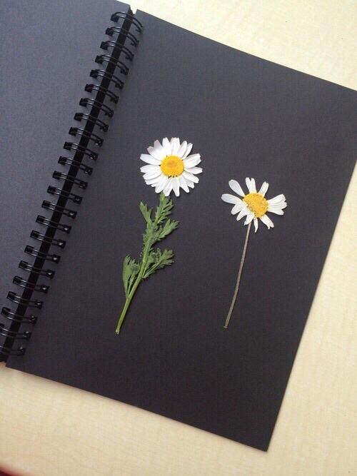 flowers, black, and grunge image