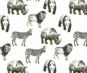 animals, wallpaper, and background image