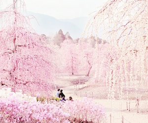 cherry blossom, pastel, and kawaii image