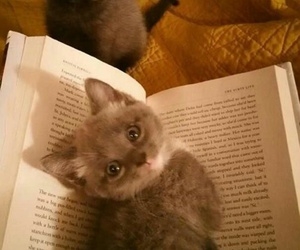 adorable, cute, and book image