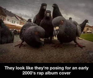 funny, rap, and bird image