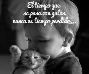 frases, Gatos, and tiempo image