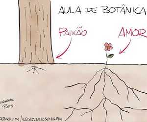 romance, paixão x amor, and flor ... image