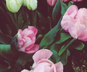 beauty, flowers, and march image