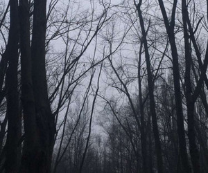 dark, forest, and wallpaper image