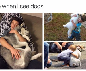 dogs and me image