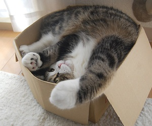 cat, box, and maru image