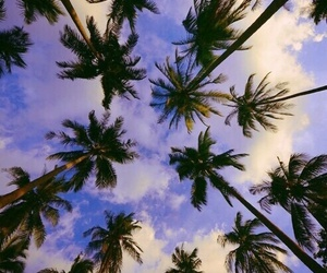 beautiful, weheartit, and palm image